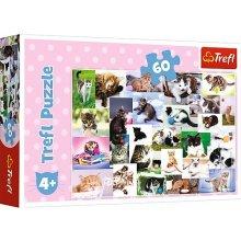 TREFL Puzzle 60 pcs - Cats world