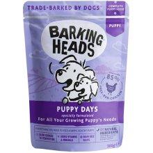 Barking Heads BH KUTSIKA EINEKOTIKE PUPPY...