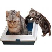 Liivakastid kassidele