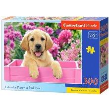Castor 300 EL. Labrador w pudełku