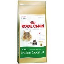 Royal Canin Maine Coon 31 kassitoit 10 kg