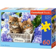 Castor 60 Elements of a kitten
