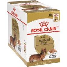 Royal Canin Dachshund (karp, 12x85g) (FBN)