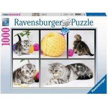 RAVENSBURGER 1000 ELEMENTÓW Brytyjskie koty...